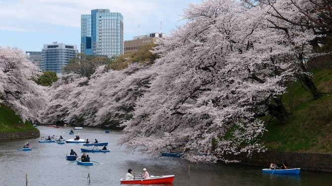 5 of the Best Things to See and Do in Tokyo in Spring